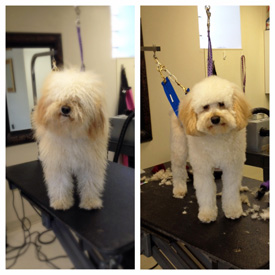 Grooming before and after photos