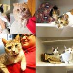 Cattery kitties