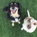 Mudge (right) and Bella (left)