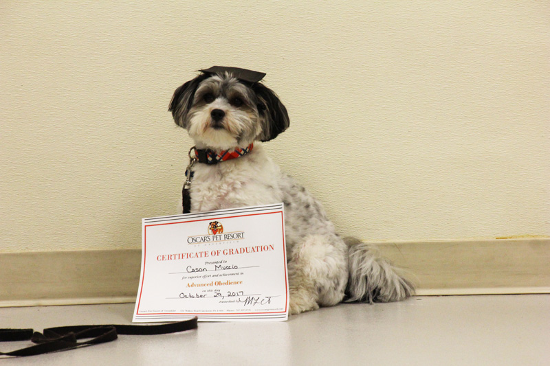 small dog with certificate