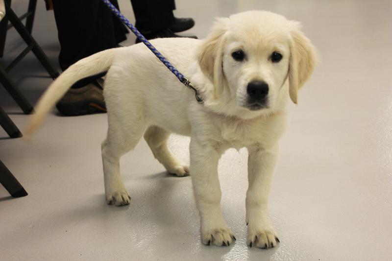 little puppy on leash