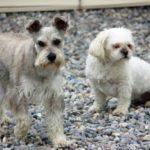 Maxi (left)