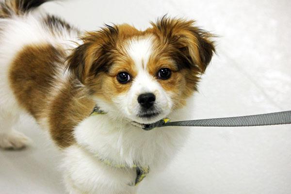 cute puppy on leash