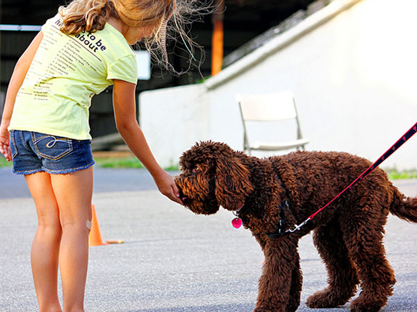 brown dog taking treat from child