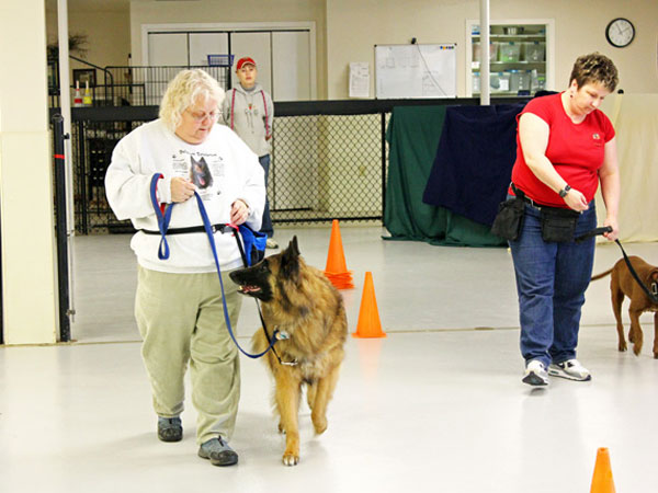 dog on leash healing to owner