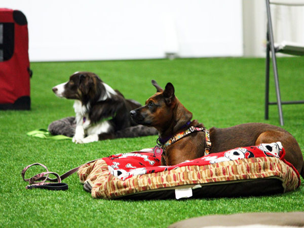 dogs laying on beds