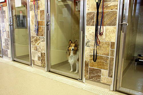 dog in boarding kennel