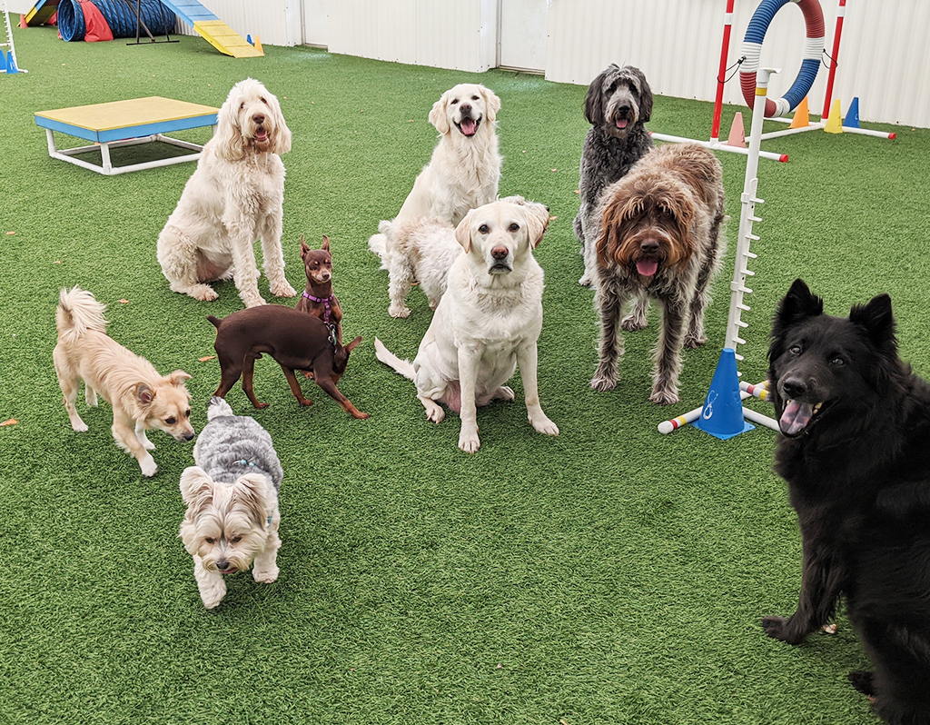 dogs gathered in indoor area