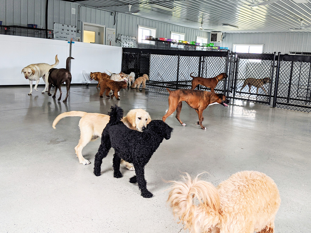 dogs playing in indoor play area