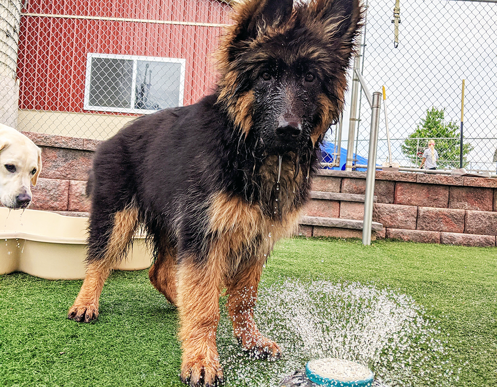puppy playing with water sprinkler