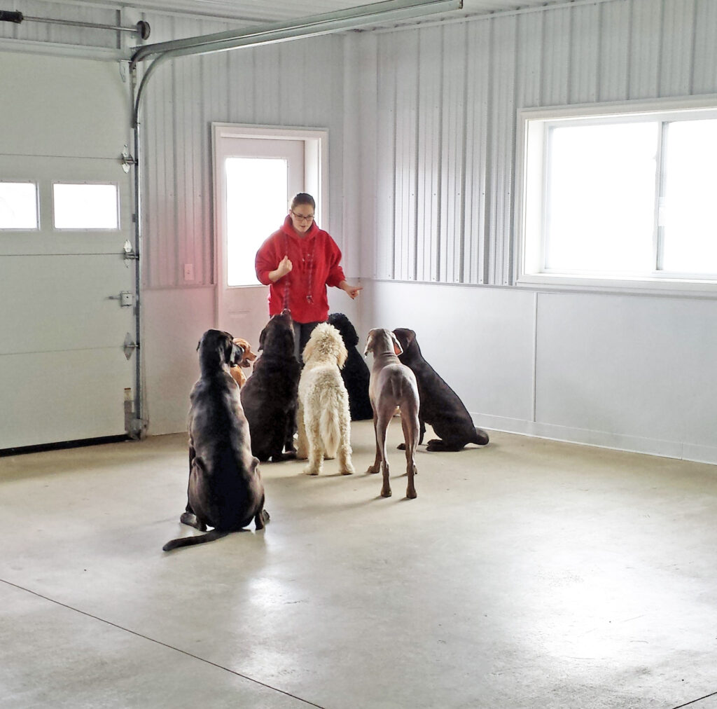 employee working with large dogs